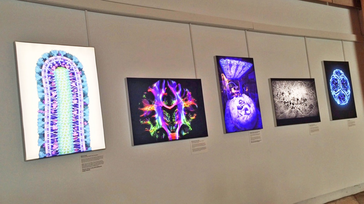 Eden Project Fabric Lightboxes